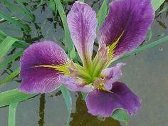 BWG Water Plants