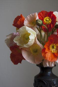 ...poppies