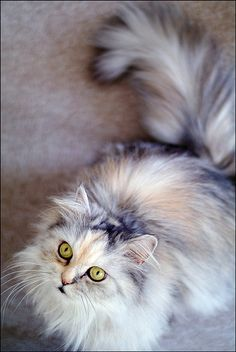 Such a gorgeous Kitty