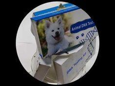 China wholesale human/ animal /dog genetic DNA testing dna sample collec... Dna Kit, Genetics, Pet Dogs, China, Animals, Collection, Animales, Animaux, Doggies