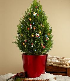 Santa's Workshop mini tree - This wonderfully fragrant tree is a true testament that good things do come in little packages. The miniature Cypress tree arrives fresh and ready-to-decorate. #christmasflowers #holidaygifts #christmasdecor