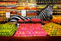 """"""" Garden Fresh by Agan Harahap The photo series exhibits a diverse set of animals casually walking through various sections of a supermarket, as though they themselves are shopping for ingredients for. Surrealism Photography, Animal Photography, Nature Photography, Zoo Animals, Cute Animals, Wild Animals, Funny Animals, Bizarre Photos, Online Shops"""