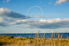 Windmills Long stretch of beach in April. Wind turbines turning, seagrass in the foreground. Can only be East Anglia Windmills, Large Prints, Art For Sale, Wind Turbine, Turning, Art Gallery, Mountains, Canvas, Beach