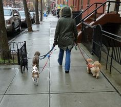 Start Your Own Dog Walking Business  ... from PetsLady.com ... The FUN site for Animal Lovers