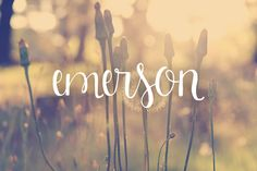 Check out Emerson by OnTheSpotStudio on Creative Market