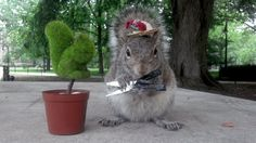 Sneezy the Penn State Squirrel has been making a name for herself with her fashionable outfits and very cute Facebook photos.