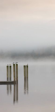 as types of weather a foggy mist in the early morning where you can't see your hand if you hold it up in front of you and the world seems to be inside a cloud A Misty Start, Derwent Water, Lake District. ~ By Adam Burton. Lake District, Beautiful World, Peace And Love, Mists, Nature Photography, Simplicity Photography, Morning Photography, Beautiful Pictures, Scenery