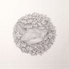 Delicate Flora And Fauna Pencil Illustrations by Denise Nestor