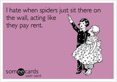 I hate when spiders just sit there on the wall, acting like they pay rent.