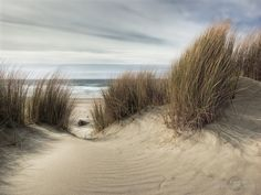 Fresh path – South Jetty , Florence Oregon by janusz l, via Flickr