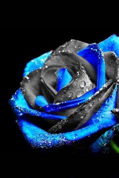 Unique rose....