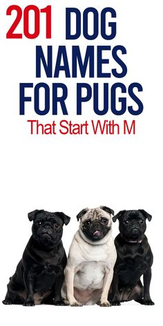 Over 200 Pug names that start with M. Find human dog names, funny dog names and etc.