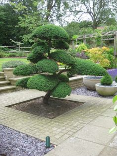Cloud pruned ilex cranata surrounded by some setts?  Then bamboo behind it.