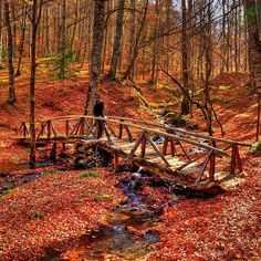canakyarphotography / Seven Lakes,Bolu ,Turkey