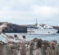 "Blogpost: Galapagosinseln hautnah: Inseltour mit der Yacht ""La Pinta"" (1)"