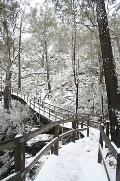 An occasional Winter wonderland, Mt Kaputar National Park - NSW The Road Not Taken, Local Attractions, South Wales, Bird Watching, Horse Riding, Pathways, Winter Wonderland, Wilderness, Road Trip