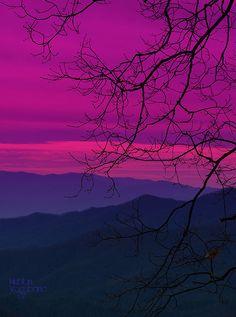 photograph | pink, purple | landscape | mountains, tree limbs | silouhette