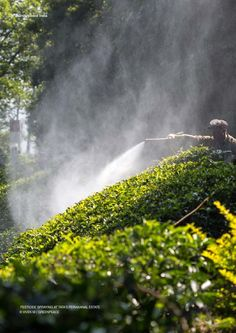 Trouble Brewing | Pesticide Residues in Tea samples from India | Greenpeace India by Latika Nehra - issuu