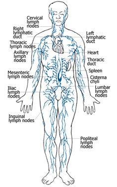 Manual lymphatic drainage 29 - 3 3
