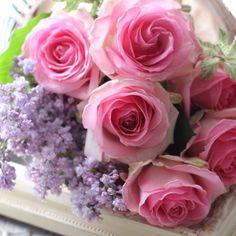 ライラックと薔薇 Rose, Flowers, Plants, Pink, Plant, Roses, Royal Icing Flowers, Flower, Florals