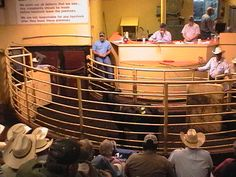 1000 Images About Cattle Auction Barns Sale Barns On