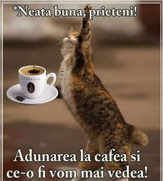 Morning Coffee, Good Morning, Motivational Words, Brown Bear, Humor, Antiques, Funny, Animals, Romania