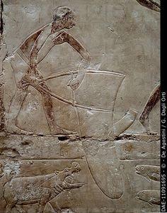 Fishing scene, painted relief, Mastaba of Princess Idut, Saqqara (Unesco World Heritage List, 1979). Egyptian Civilisation, Old Kingdom, Dynasty VI.