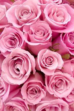 ✿⊱❥ A delicadeza das rosas