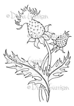 """Now available on Etsy. """"Thistle"""" Digi Digital Stamp, by Diana Garrison. $3.00"""