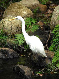 Ibis in Florida.  Gainesville is a great #bird watching location.  #birdwatching  www.GainesvilleFloridaHomes.com  Contact Mark Cohen, #Realtor & #Broker, #MarkCohen  #Home  #House  #Condo  #Land  #RealEstate  #Property  #ForSale  #Eyemark