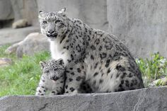 40 Animals and Their Adorable Offspring