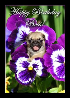 Happy Birthday Boss Pug puppy in Pansies card. Personalize any greeting card for no additional cost! Cards are shipped the Next Business Day. Happy Grandparents Day, Happy Mothers Day, Happy Valentines Day, Birthday Pug, Happy Birthday Boss, 20th Birthday, Pug Puppies, Pugs, Happy Boss's Day