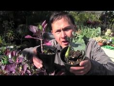 ▶ My Favorite Edible Perennial Vegetable You Should Grow in Your Garden - YouTube