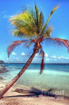 Another Palm Tree Bahia Honda State Park, Florida Keys.