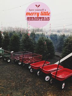 Radio flyer wagons to pick out a Christmas tree.