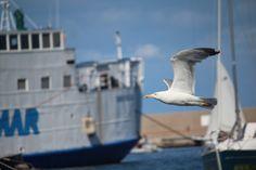 #Ventotene #estate2015 #LNV2015 #travellers #travelling #sea #Italy #isle