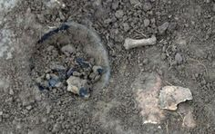 The remains of four Anglo-Saxon adults have been found in shallow graves during excavation work at a river in Northamptonshire.   An early Anglo-Saxon pottery vessel, a skull and a bone were unearthed at one of the four graves [Credit: Northamptonshire Archaeology] The graves, 12in (30cm) below ground level, were found during the work to create a new backwater at the River Ise at Rushton near Kettering.