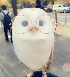 Aesthetic owl out to the shops Cute Wild Animals, Baby Animals Super Cute, Pretty Animals, Baby Animals Pictures, Cute Little Animals, Cute Animal Pictures, Cute Funny Animals, Animals Beautiful, Animals And Pets