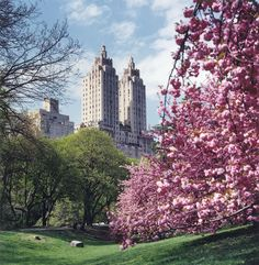{ travel :: central park, manhattan, new york city } Blue Ridge Mountains, Oh The Places You'll Go, Places To Visit, New York City, Central Park, Destinations, I Love Nyc, Photos Voyages, City That Never Sleeps