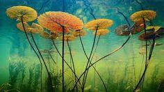 Znalezione obrazy dla zapytania underwater world