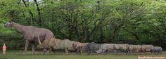 Rhinos Comparison by SameerPrehistorica on DeviantArt