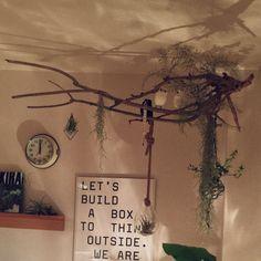 kidzawawaさんの、壁/天井,観葉植物,一人暮らし,流木,エアプランツ,PUEBCO,フクロウ,ハンギング,AKIRA,Designers Republic,のお部屋写真