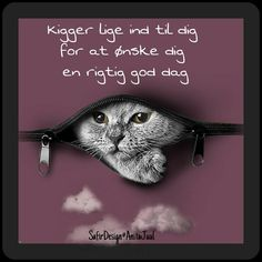 Kigger lige ind til dig for at ønske. Animals And Pets, Funny Animals, Mood Pics, Funny Animal Videos, Quote Posters, Good Morning Quotes, Vise Ord, Smiley, Spas