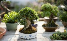 Bonsai can be so small and yet feel so big