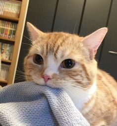 Blanket Nom and like OMG! get some yourself some pawtastic adorable cat shirts, cat socks, and other cat apparel by tapping the pin!