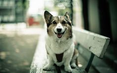 1920x1200 pictures of dog