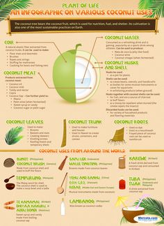 Coconut Uses Infographic |  The Coconut Tree is one of the most functional plants in the world. Most of us are familiar with the benefits of Coconut Water that come from the Coconut Fruit itself but traditional cultures around the world have been using other parts of the coconut tree and fruit for centuries. Coconut meat husks and shells from the fruit as well as leaves trunks and roots from the coconut tree are all useful in some way. This makes coconut cultivation one of the most…