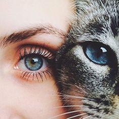 Imagem de cat, eyes, and girl Eye Photography, Animal Photography, Pretty Eyes, Cool Eyes, Beautiful Tumblr, Cats Tumblr, Aesthetic Eyes, Fancy Cats, Stunning Eyes