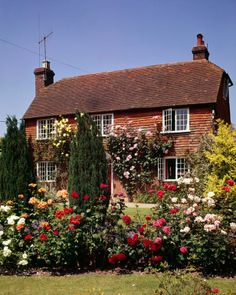 Roses growing in the pretty garden in front of a peg-tiled house in the Kentish village of Hawkhurst