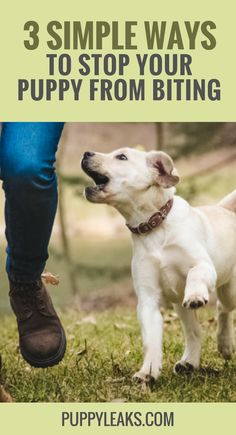 Want to stop your puppy from biting everything? Here's 3 methods that will teach your puppy to stop biting your hands and everything else they come into Puppy Potty Training Tips, Training Your Dog, Crate Training, Training Pads, Agility Training, Stop Dog From Biting, Stop Puppy Biting, Easiest Dogs To Train, Shepherd Puppies